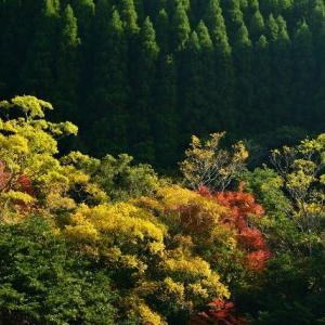 延岡ふるさと里山のチカラ再発見写真館NO 2350