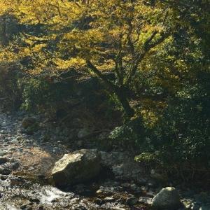 延岡ふるさと里山のチカラ再発見写真館NO 2351