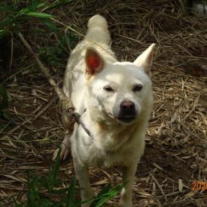 行方不明の女性を無事発見 警察犬フレイル号、靴の臭い頼りに2キロ追跡 吉川署が感謝状