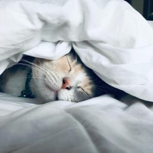 四の五の言わず、まず寝て下さい!