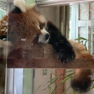 【旅行】連休2日目:動物公園とオリンピック開会式(-_-)