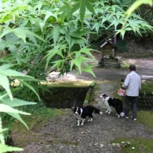 木陰散歩&ハルちゃん投げ練。