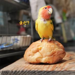 パンに乗る!