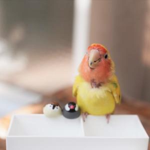 新入りの こーどの鳥さん