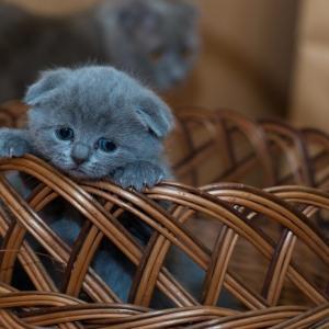 猫を飼いたい衝動に駆られる