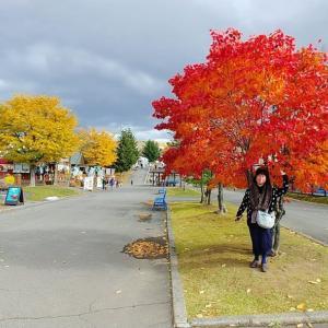 紅葉が綺麗な車旅