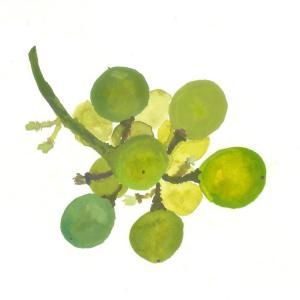 濃厚な葡萄の香り