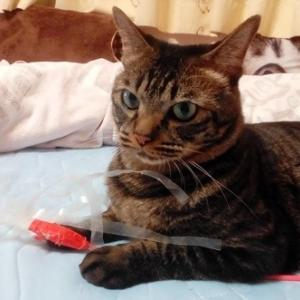 枕に連続激突 猫動画