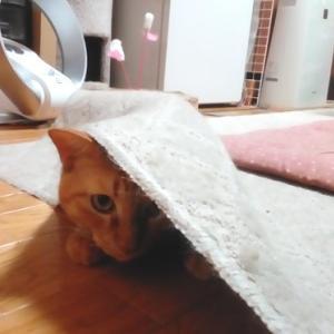 ハイパースイッチIN 猫動画