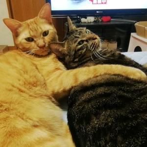 ご奉仕愛 猫動画