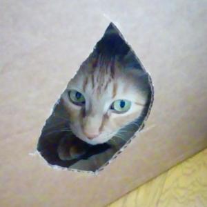 どこから出るかなあ 猫動画
