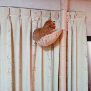 木登りタワー 華麗なジャンプ 猫動画
