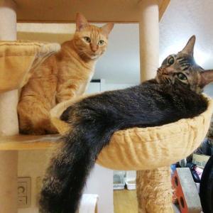 タワーカゴ 争奪戦 猫動画