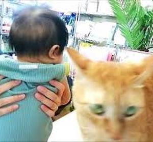 BABYは エイリアン・・・ 猫動画