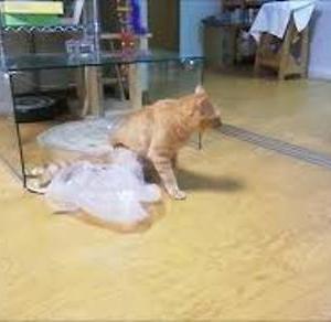 取っ手にハマって 落ちた~ 猫動画