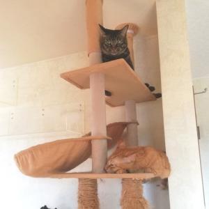タワーの上段には セブン 猫動画