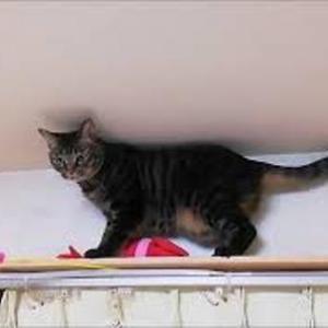 ジャラシをGETできるかなあ 猫動画