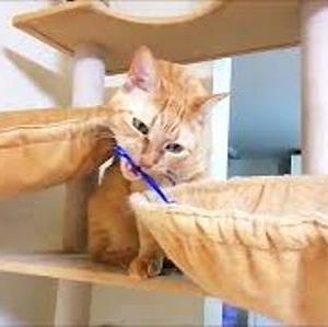 カゴの中の 網~ 猫動画