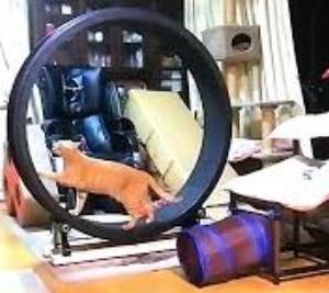 動物ピース 初出演 キャットホイール 猫動画