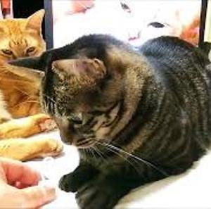 ママと共同遊び 猫動画