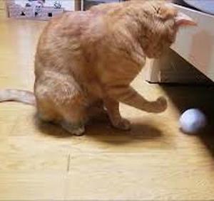 アミアミリンゴ 猫動画