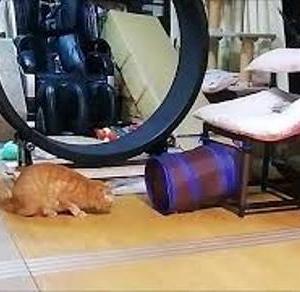 ニャオスカ賑やかな子 猫動画