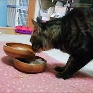 オモチャをお皿に隠すと・・・ 猫動画