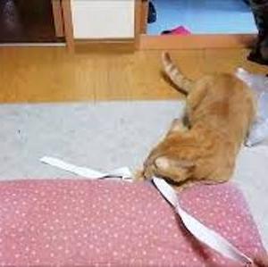 ぶっといゴム紐 猫動画