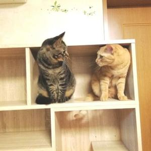 ニャンの遊び場になる 新TV台 設置 猫動画