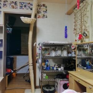 木登りタワー 半倒壊 猫動画
