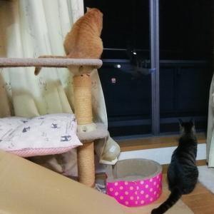 小虫発見 猫動画