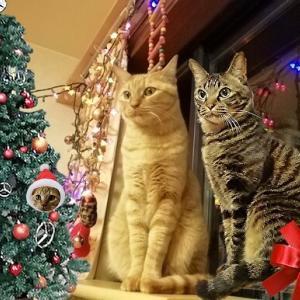 我が家のちょっとだけクリスマス 猫動画