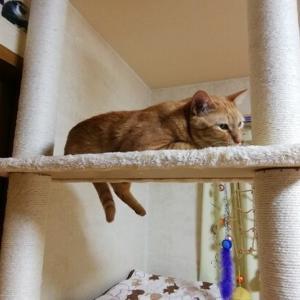 毛玉ボール 遊び 猫動画