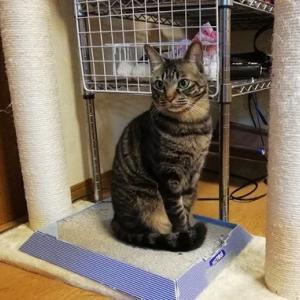 木登りタワーセミ停まり 猫動画