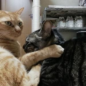 フェチ男降臨 猫動画