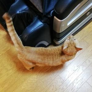 デカボールで 遊びましょう~ 猫動画