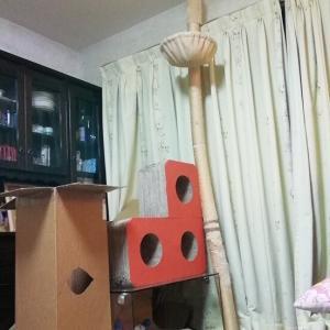 木登りタワー倒壊 奇跡の動画 猫動画