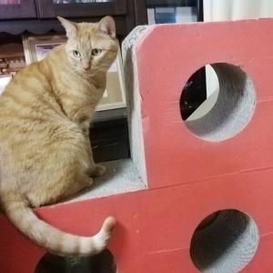 ゴミ系オモチャ 猫動画