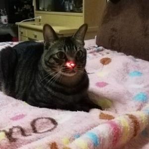 ニャンビーム セブンだけノリノリ 猫動画
