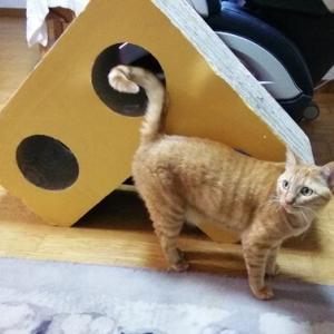 デカ爪とぎと箱のコラボ遊び 猫動画