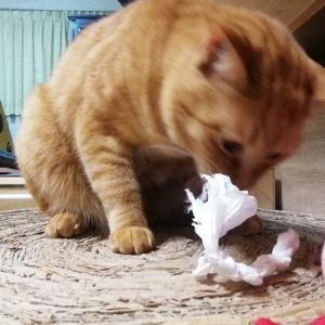 セブンより コンビニ袋が 大好き~ 猫動画