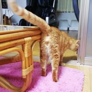 ドア開け はじめました  猫動画