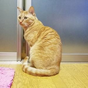 豪快すぎるドア開け遊び 猫動画