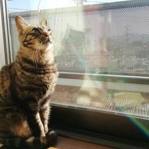 3段ハウスのオモチャがほしい 猫動画