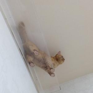 毛玉ボール 猫動画