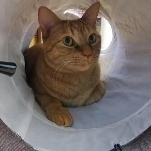 トンネルIN  猫動画