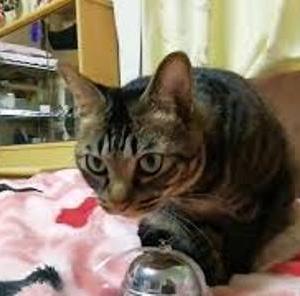 ベル鳴らしの練習 猫動画