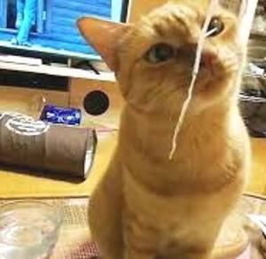 大根ツマ 美味いにゃ 猫動画