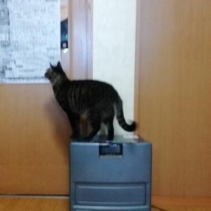 ドアは開きませんよ 猫動画
