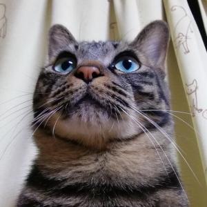 お邪魔虫 が 行った~ 猫動画